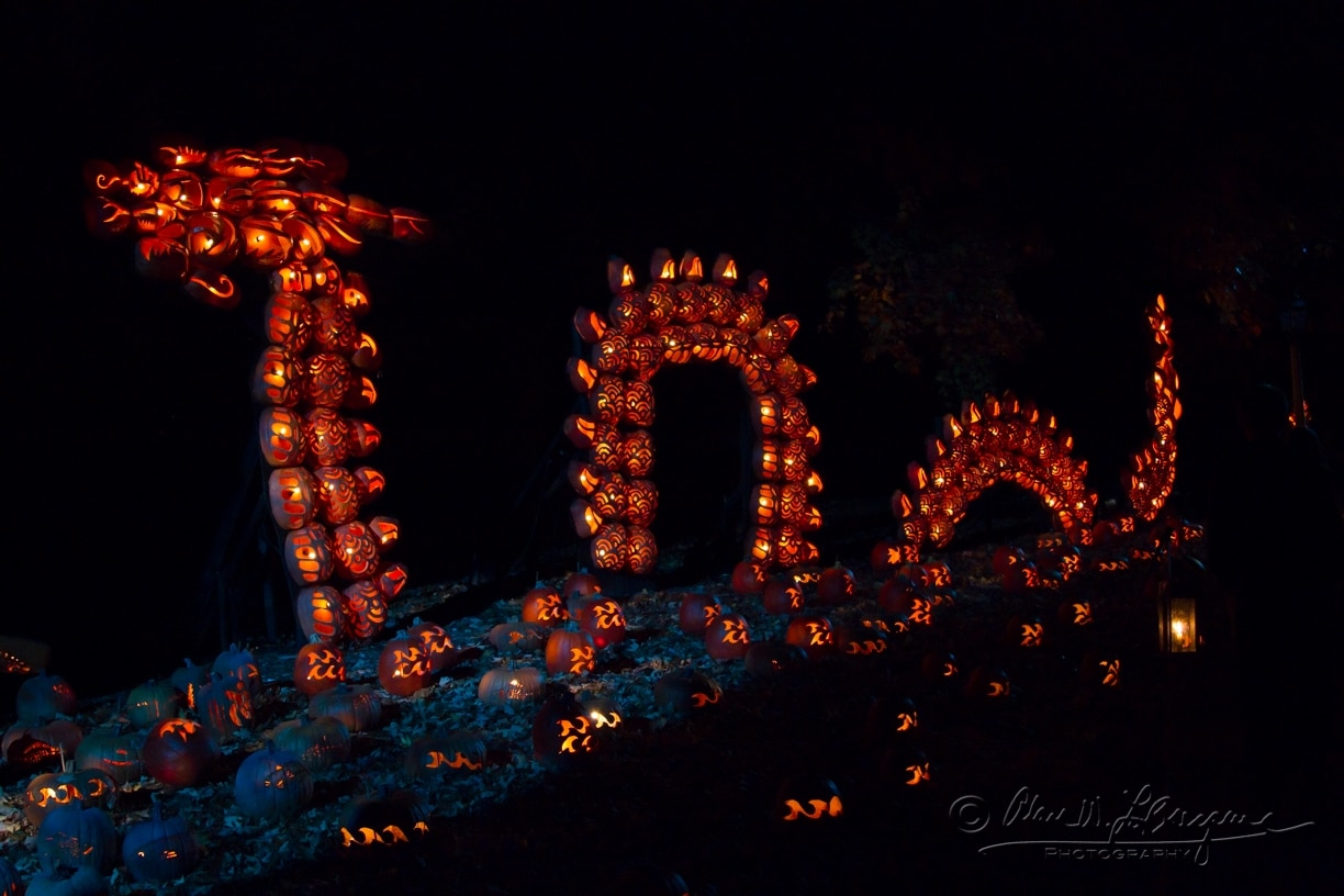 Dragon made of pumpkins!